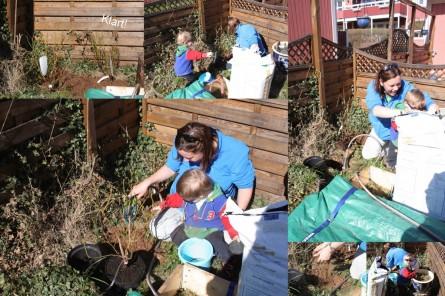 Blåbärsplantering